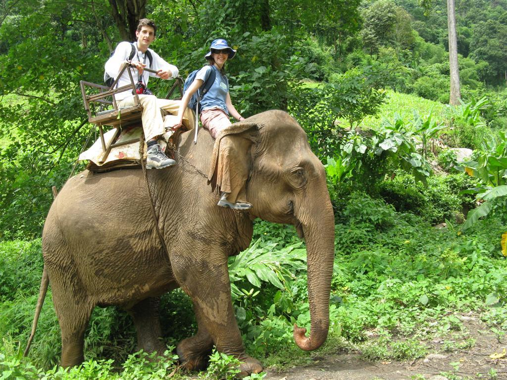 Elephant Safari Tours India